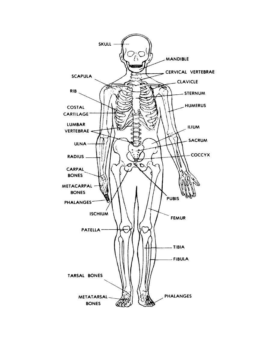 Hum N Skelet Quiz L E Defender Uto Fo