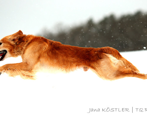 Sonnentier_Photography-AZ4V0962