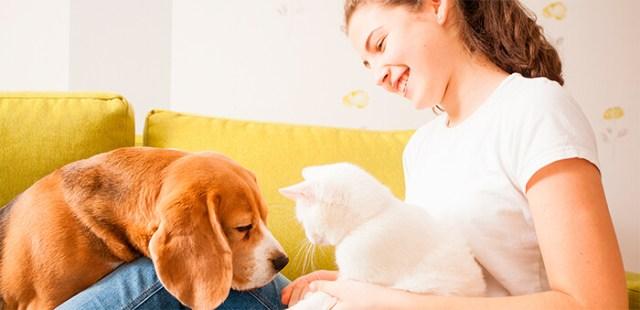 Pasos para presentar un gato a tu perro