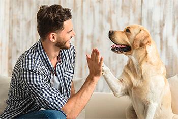 Los perros ven a blanco y negro ¿es un mito?