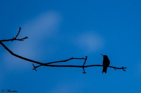 Hummer Silhouette