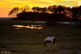 Sunset at Chincoteague NWR