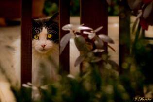 Zotsie Sees You!