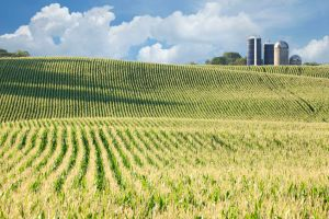 What is a GMO and why should you care?