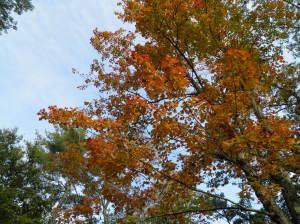Fall foliage fail