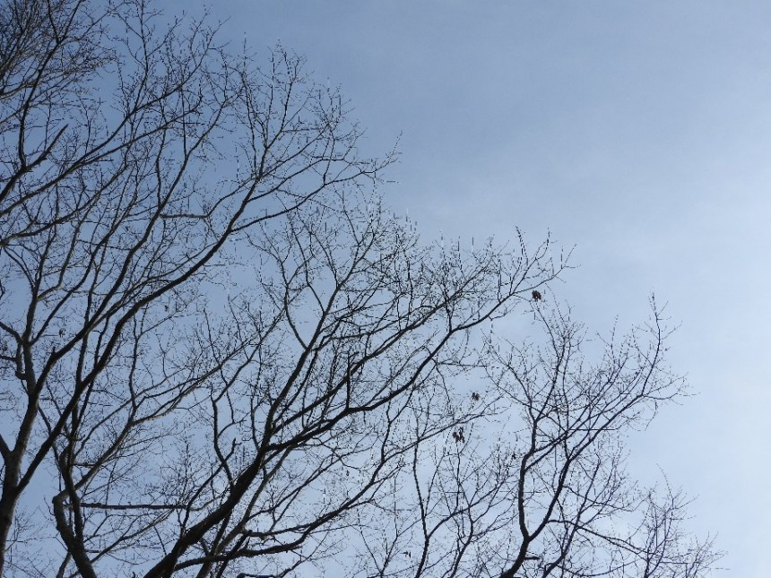 Leaves, far away