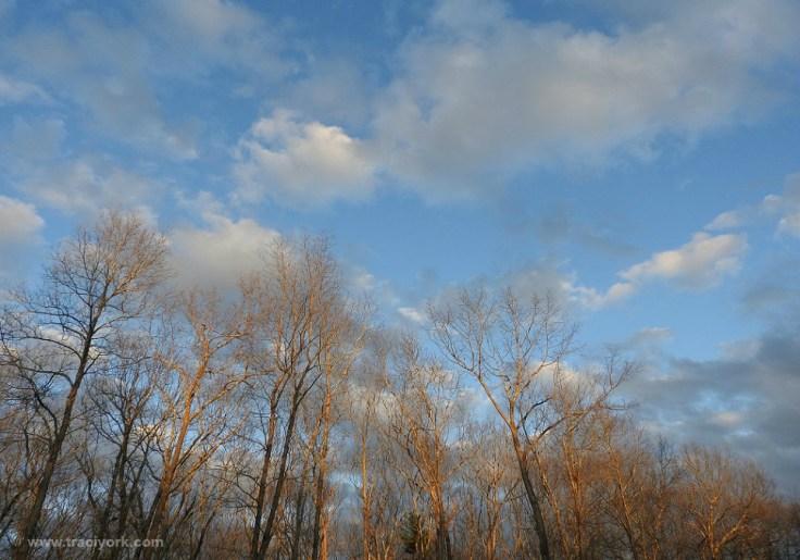 Foto Friday 8 Sunset trees