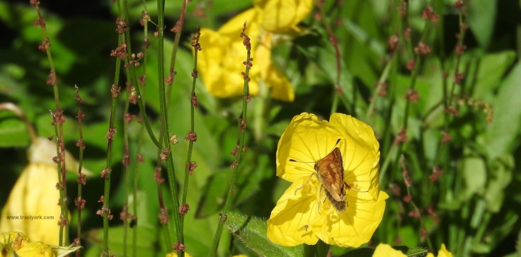 Butterfly and yellow flower