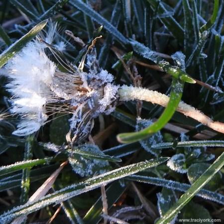 Frozen Wishes