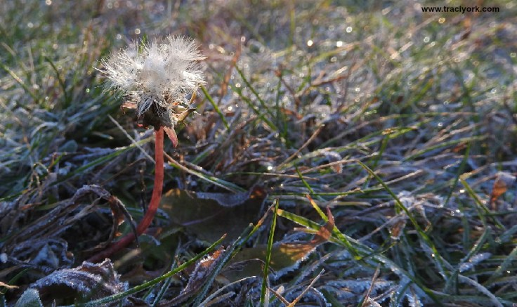 Frost, Flowers, Feathered Friend