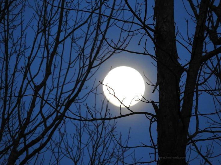 Phoebe, Goldfinch, Full Moon