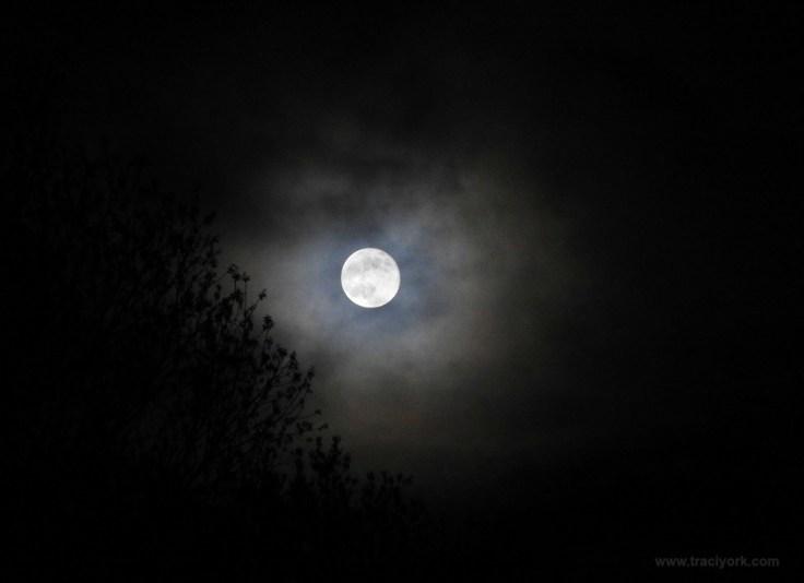 Sun Bow, Crow, Dandelion, Phoebe, Full Moon