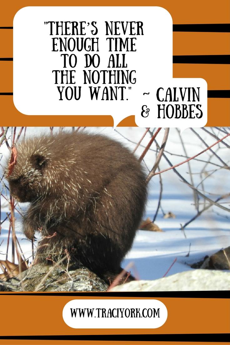 Quote Challenge Week 3 Calvin & Hobbes Quote