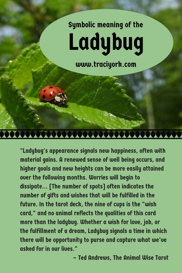 Ladybug spiritual meaning ladyblog symbolic meaning of the ladybug witch quote challenge for national photography month 2017 week 3 biocorpaavc Choice Image