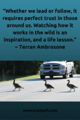 Quote Challenge Week 3 Terran Ambrosone Quote