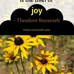 Quote Challenge Week 5 Theodore Roosevelt Quote