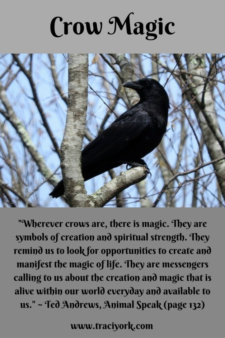Witch Quote Challenge Crow Magic, Ted Andrews Quote