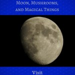 Moon, Mushrooms, and Magical Things