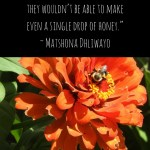 Bee Quotos - Matshona Dhliwayo quote