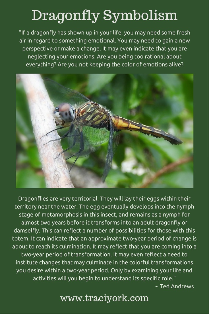 Dragonfly Symbolism byTed Andrews