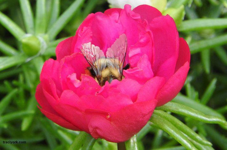 Bee, Moth, Fairies, Vulture, and Cardinal
