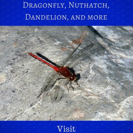 Dragonfly, Nuthatch, Dandelion, and More Blog Graphic