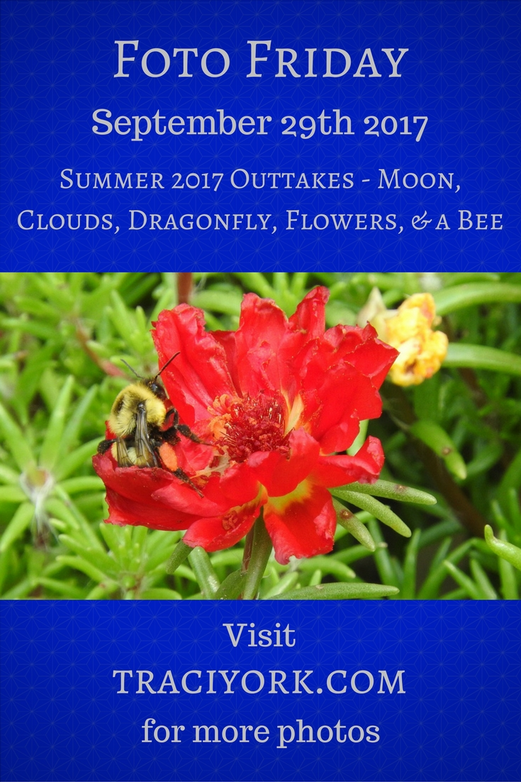 Summer 2017 Outtakes - Moon, Clouds, Dragonfly, Flowers, and a Bee - Foto Friday - Traci York