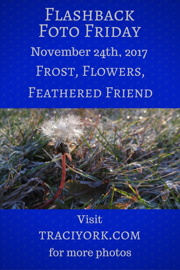 Frost, Flowers, Feathered Friend – Flashback Foto Friday