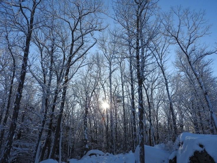 Snowy Slightly Silent Sunday