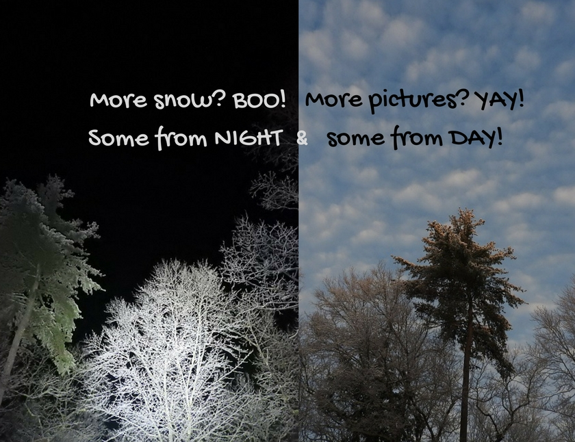 Some from NIGHT and some from DAY!