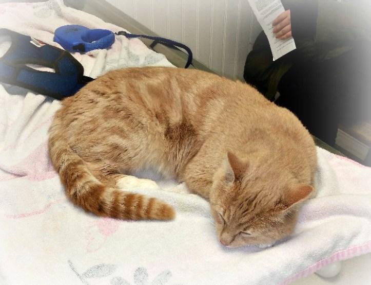 stray cat vet visit