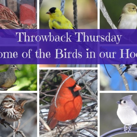 Throwback Thursday - Some of the Birds in our Hood blog thumbnail