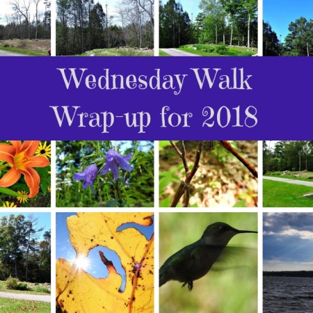 Wednesday Walk Wrap-up for 2018 blog thumbnail