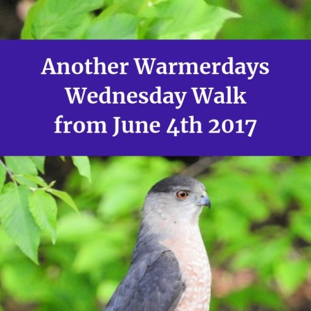 Another Warmerdays Wednesday Walk from June 4th 2017 blog thumbnail