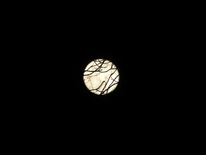12 Full Snow Moon Photos from February 19 2019