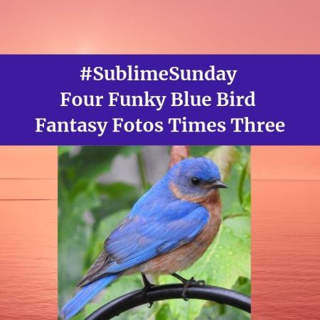 Four Funky Blue Bird Fantasy Fotos