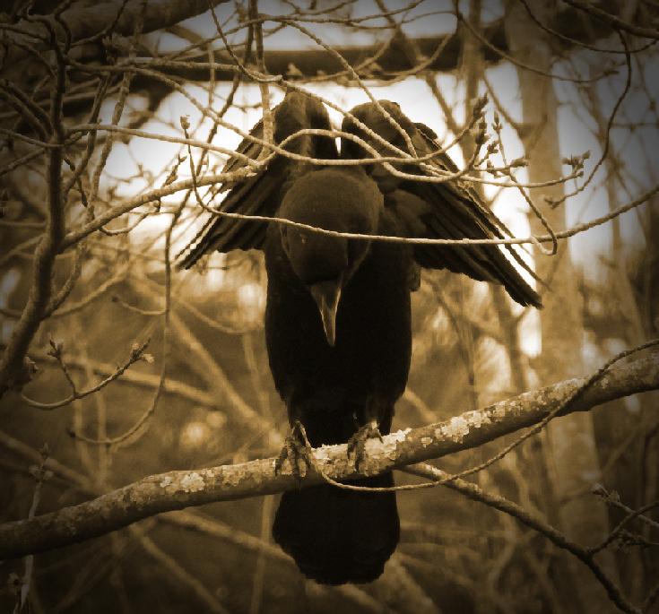 Five More Nature Shots