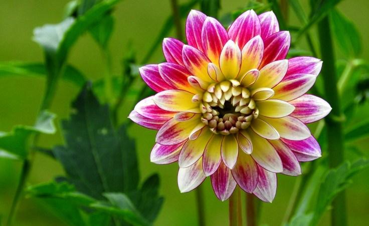 Five Flower Fotos