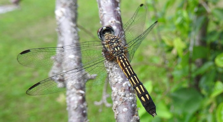 16 Dragonfly Photos