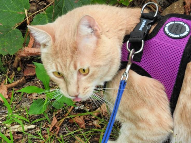 Wednesday Walk With Freddie