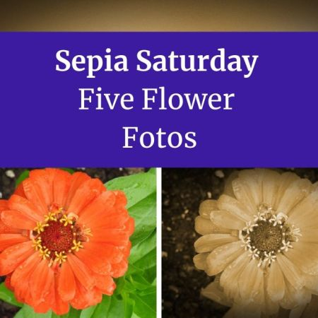 Sepia Saturday Five Flower Fotos blog thumbnail