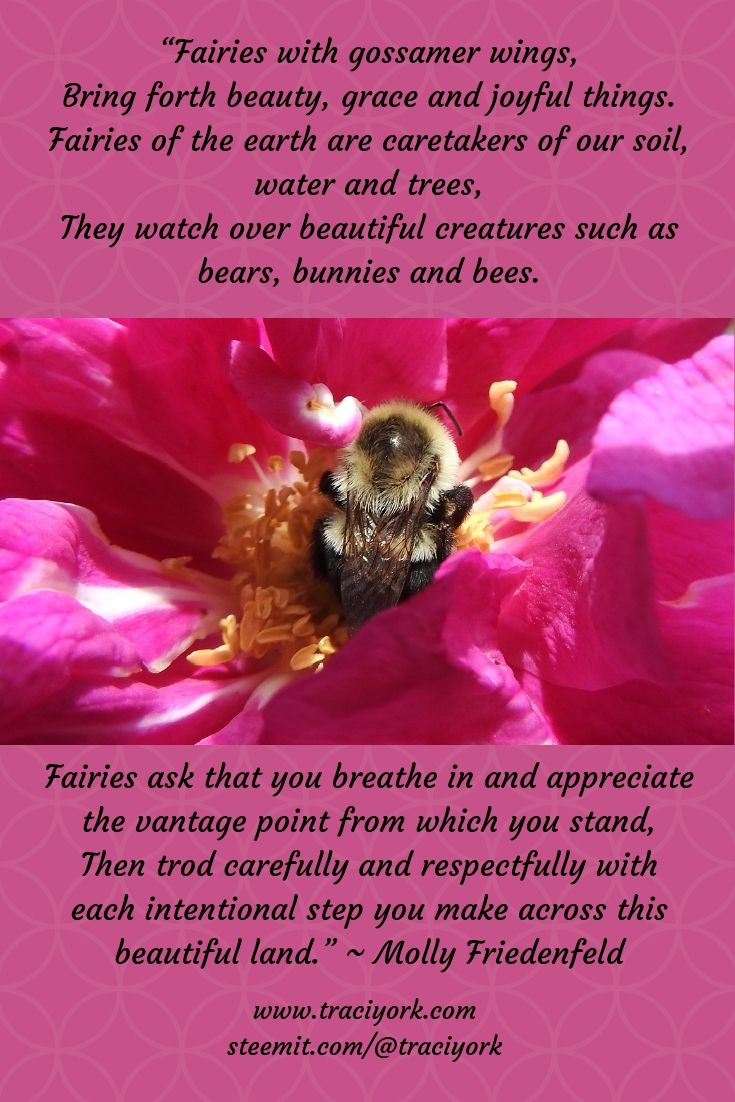 Redo Molly Friedenfeld Quote with Bee picture 2019