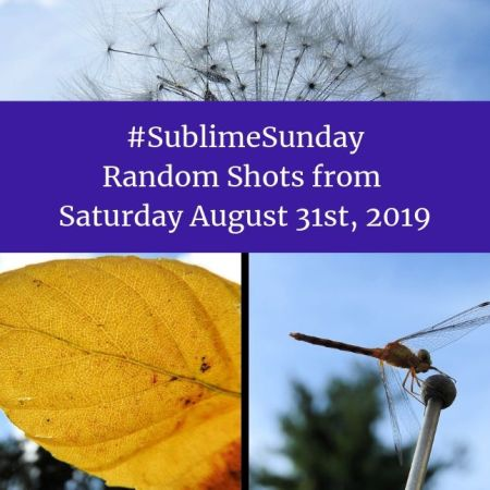 Sublime Sunday Random Shots from Saturday August 31st, 2019 blog thumbnail
