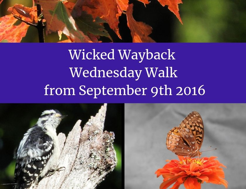 Wicked Wayback Wednesday Walk from September 9th 2016 blog thumbnail