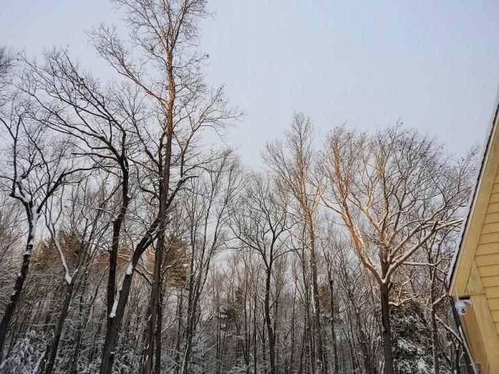 Wednesday Walk in my Snowy Yard