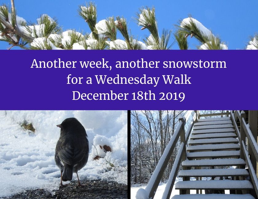 Another week, another snowstorm for a Wednesday Walk December 18th 2019 blog thumbnail