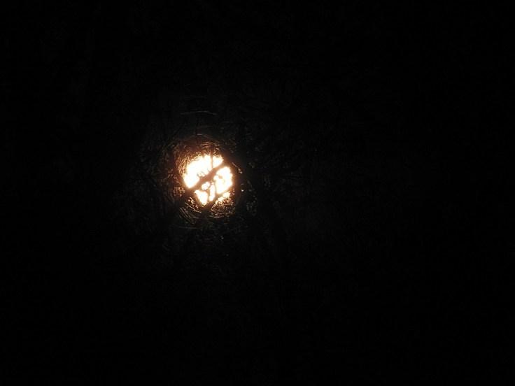 2. Halloween Blue Hunter's Moon