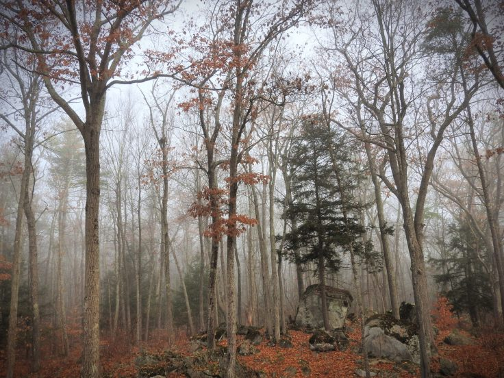 Foggy Forest Wordless Wednesday Walk