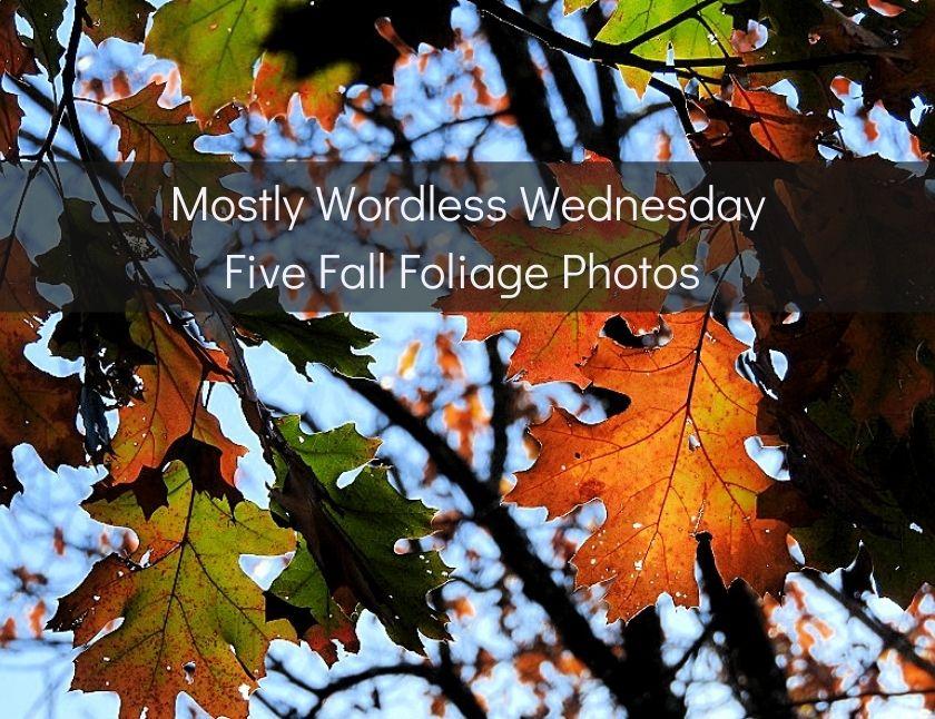 Five Fall Foliage Photos blog thumbnail