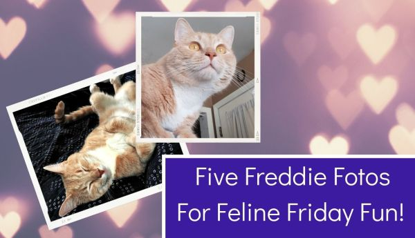 Five Freddie Fotos For Feline Friday Fun! blog thumbnail